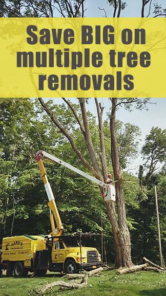 Save BIG on multiple tree removals